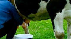 Milker milk a cow. - stock footage