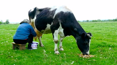 Milker milk a cow. Stock Footage