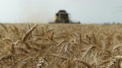 Wheat field harvested by a modern combine tractor harvester shearers at sunset Stock Footage