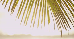 4K: Tropical/Exotic Palm Tree Pan/Golden Light/Slow Motion - stock footage