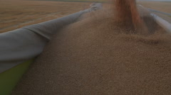 Harvesting Seed Pouring Combine Machinery loaded in tractor tow. Stock Footage