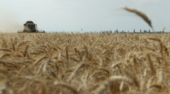 Wheat field harvested by a modern combine tractor harvester shearers at sunset - stock footage