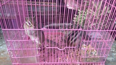 The squirrel was shut in the cage and lost the freedom. Stock Footage