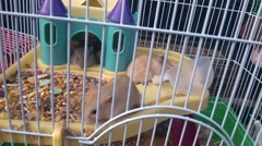 Hamster at feeding and activity Stock Footage