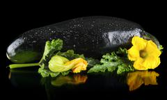 Closeup wet zucchini with flower and courgette leaf on black background Stock Photos