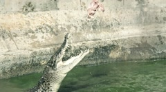 Old footage film grain 50 years old documentary of crocodile pit with crocodiles Stock Footage