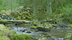 Small Wild River In The Forrest Stock Footage