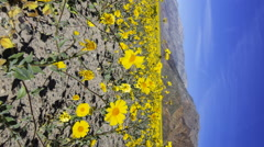2axis MoCo Time Lapse of Super Bloom 2016 at Death Valley -Vertical- Stock Footage