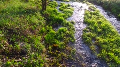 Walking on wet grass. Verdure Meadow with grass. Stream of clean water. Morning. Stock Footage