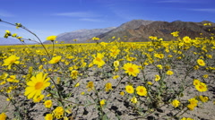 2axis MoCo Time Lapse of Super Bloom 2016 at Death Valley -Dolly Pull/Pan L Long Stock Footage