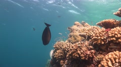 Gorgeous colorful coral reef of the Maldivian archipelago. Stock Footage