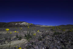 5K 2axis MoCo Time Lapse of Desert Gold in Death Valley Stock Footage