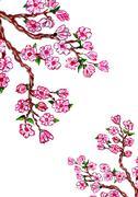 Sakura Branch Painting Stock Illustration