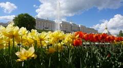 Peterhof.Tulips.Slow motion.Saint Petersburg Stock Footage
