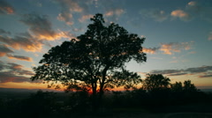 Sunset time-lapse with tree in foreground Stock Footage