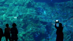 Silhouette of anonymous people watching in a large aquarium. - stock footage