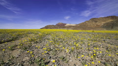 2axis MoCo Time Lapse of Super Bloom 2016 in Death Valley 2 Stock Footage