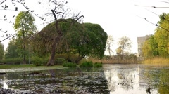 A peaceful garden scene, bushes, trees and a quiet water lake pond.  Stock Footage