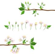 Cherry Blooming Process Illustration - stock illustration