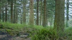 Tracking Shot Of The Forrest - stock footage