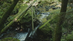 A small waterfall that is being blocked by some trees in a forrest. Stock Footage