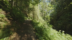 A Steadicam running fast over a path in the black forrest in Germany. - stock footage