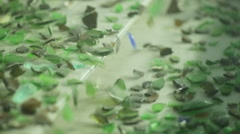Sorting  cullet. Glass recicling. Renewable production Stock Footage