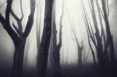 Dark haunted Halloween forest - stock photo