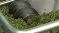 Automatic harvest of wine grapes - grinding white grapes. Stock Footage