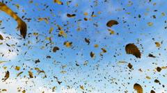 Falling leaves with blue sky in the background Stock Footage