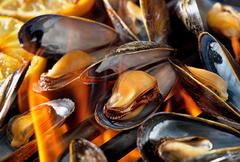 Grilled Blue Mussels - stock photo
