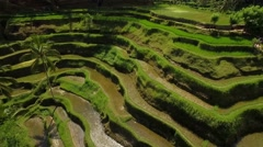 Rice Terraces at Indonesia, Bali Stock Footage