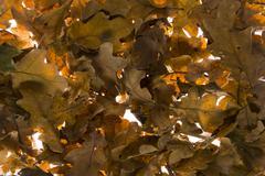 back ground of autmn leaves - stock photo