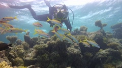 Underwater videographer, shooting a flock of goatfish. Stock Footage