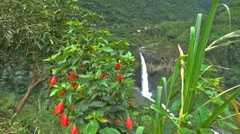 A Hummingbird Gathers Nectar in front of a Waterfall in the Jungle Stock Footage