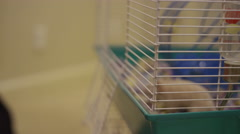 A little boy takes a hamster out of its cage and holds it Stock Footage