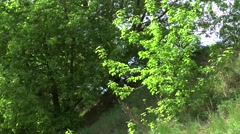 Tree grows at the hill and waves on windy day noon Stock Footage