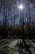 Sun and shadows on swamp near New Orleans, Louisiana, USA Kuvituskuvat