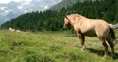 Horse in mountain Stock Footage