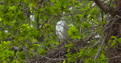 Slow Motion - Sparrow flies past a nesting Egret Stock Footage