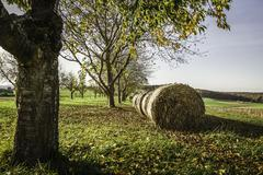 Round haystacks in a row in autumnal scene - stock photo