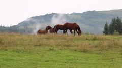 Beautiful horses on pasture Stock Footage