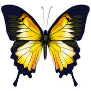 Butterfly. Yellow butterfly isolated illustration on white background Stock Illustration