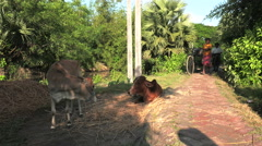 Pedal cart in the Indian Sundarban Stock Footage