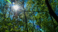 Timelapse the sun shines through the leaves of the trees in the forest green Stock Footage