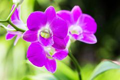 Bright purple flowers - stock photo