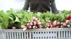 Closeup of farmer carrying tray of radishes Stock Footage
