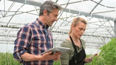 Couple of gardener checking plants in greenhouse - stock footage
