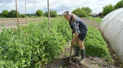 Gardener in vegetable garden digging ground Stock Footage