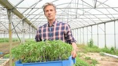 Farmer in greenhouse holding tray of organic plant - stock footage